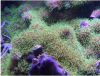 coral3.png