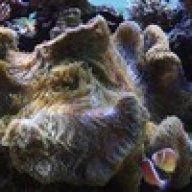 reefkeeper2