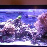 JM_Reef