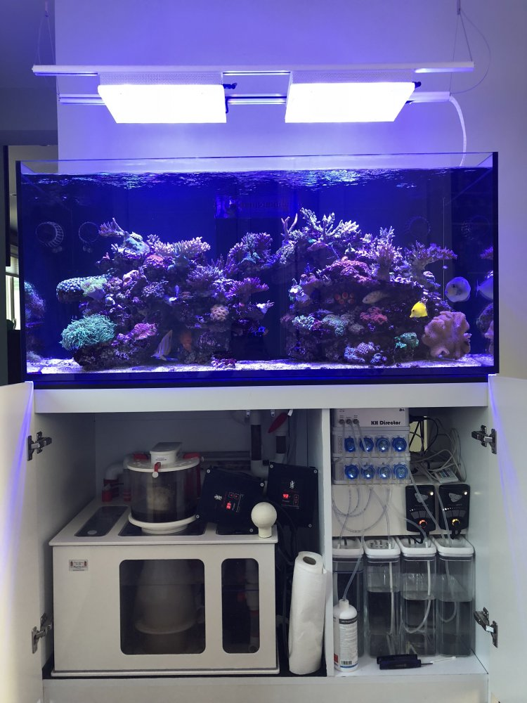 Fs Red Sea Reefer 425xl High End Setup Boston Reefers