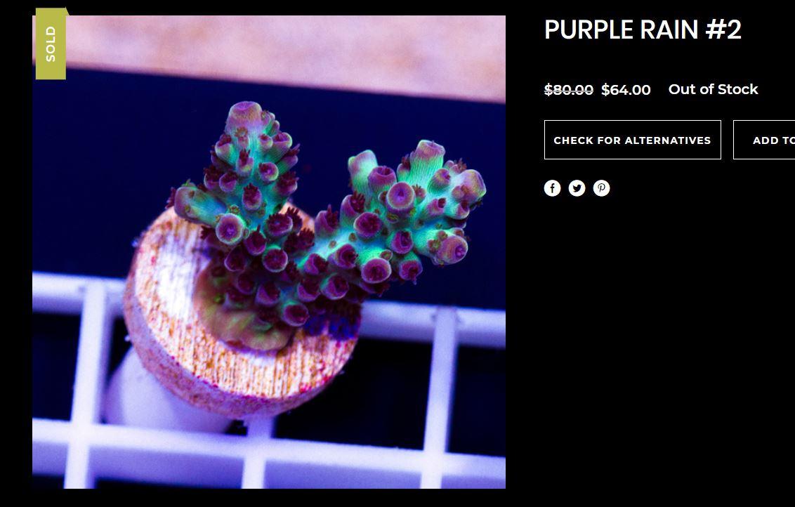 PurpleRainAcro.JPG